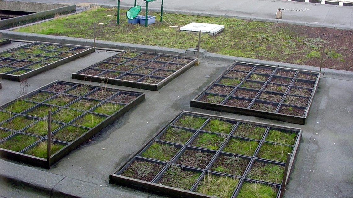 Comment exploiter la toiture de manière écologique ?