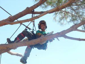 élagage d'arbre et précautions à prendre