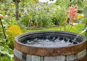 eau jardin