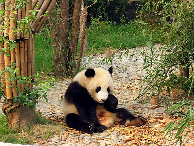 Séjourner à Chengdu lors d'un voyage en Chine: que voir dans cette ville?