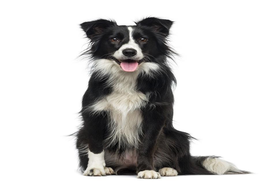 Comment lutter contre la mauvaise haleine chez le chien ?